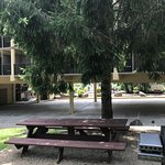 Shaded picnic area with gas grills