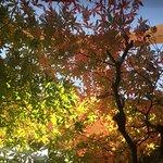 秋には、温泉から紅葉が楽しめます。