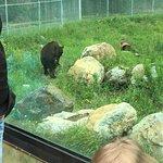 Kamloops Wildlife Park照片