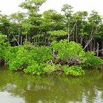 仲間川天然保護区域の写真