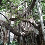Green Park - Visakhapatnam Image