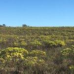 Bild från Bontebok National Park