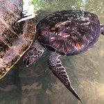 Smukke skildpadder