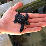 Baby skildpadder
