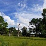 Magnolia Plantation & Gardens照片