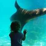 Pittsburgh Zoo & PPG Aquariumの写真