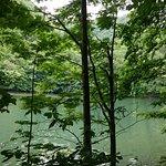 林に囲まれた池