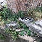 Foto di Torre Argentina Cat Sanctuary