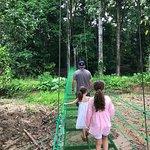Bilde fra La Foresta Nature Resort