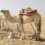 Photo of Decor Star Wars Tunisie