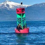 Alaska Travel Adventures照片