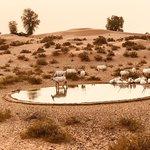 Φωτογραφία: Dubai Desert Conservation Reserve