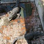 Foto de Siem Reap Crocodile Farm