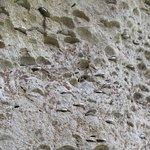 Conchiglie fossili e monetine