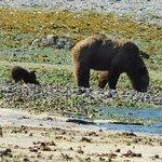 Momma Bear and newly born Cub