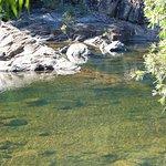 Alligator Creek