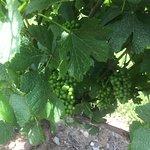Foto Quarry Hill Winery