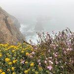 Foto de Bodega Head