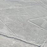 纳斯卡草原的线条图照片