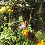 Kep Butterfly Farm의 사진