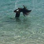 Foto de Ant Atoll