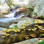 Wild fungus and mushrooms thrive in the humid and wet Stoney Creek gorge