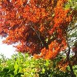 季節はずれの紅葉