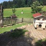 Ein Hasenhaus