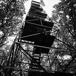 صورة فوتوغرافية لـ Cook Forest