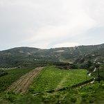 Zicht op de wijngaarden