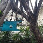 Ring Toss Tree