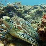 FUN DIVERS ZANZIBAR – Green sea turtle