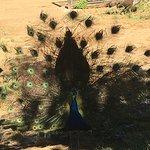 巴塞罗那动物园照片