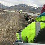 Photo of Green Dog Svalbard