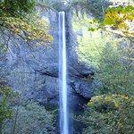 Billede af Latourell Falls