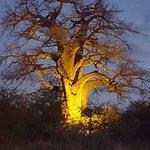 Planet Baobab Photo