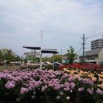 Rose Park, 후쿠야마