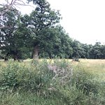 Protected oak park
