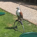 Willows Bird of Prey Centre照片