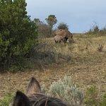 Foto de Botlierskop Private Game Reserve