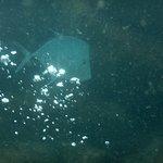 Mergulho Ilha do Arvoredo - Peixe