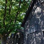 ケヤキ並木と倉庫群