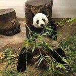 Adelaide Zoo resmi