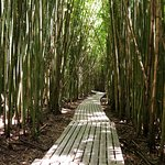 Trail on Bamboo Forest