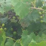 Cypress Bend Vineyards Photo