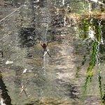 An aracnid at the falls