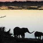 Elefantes bajando al río al atardecer.
