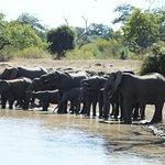 Refrescándose en el pozo - entre babuines, girafas, cebras y antilopes