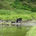 Black bear with Bald Eagle having a bath