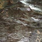 Foto de Ulu Ulu National Park Resort